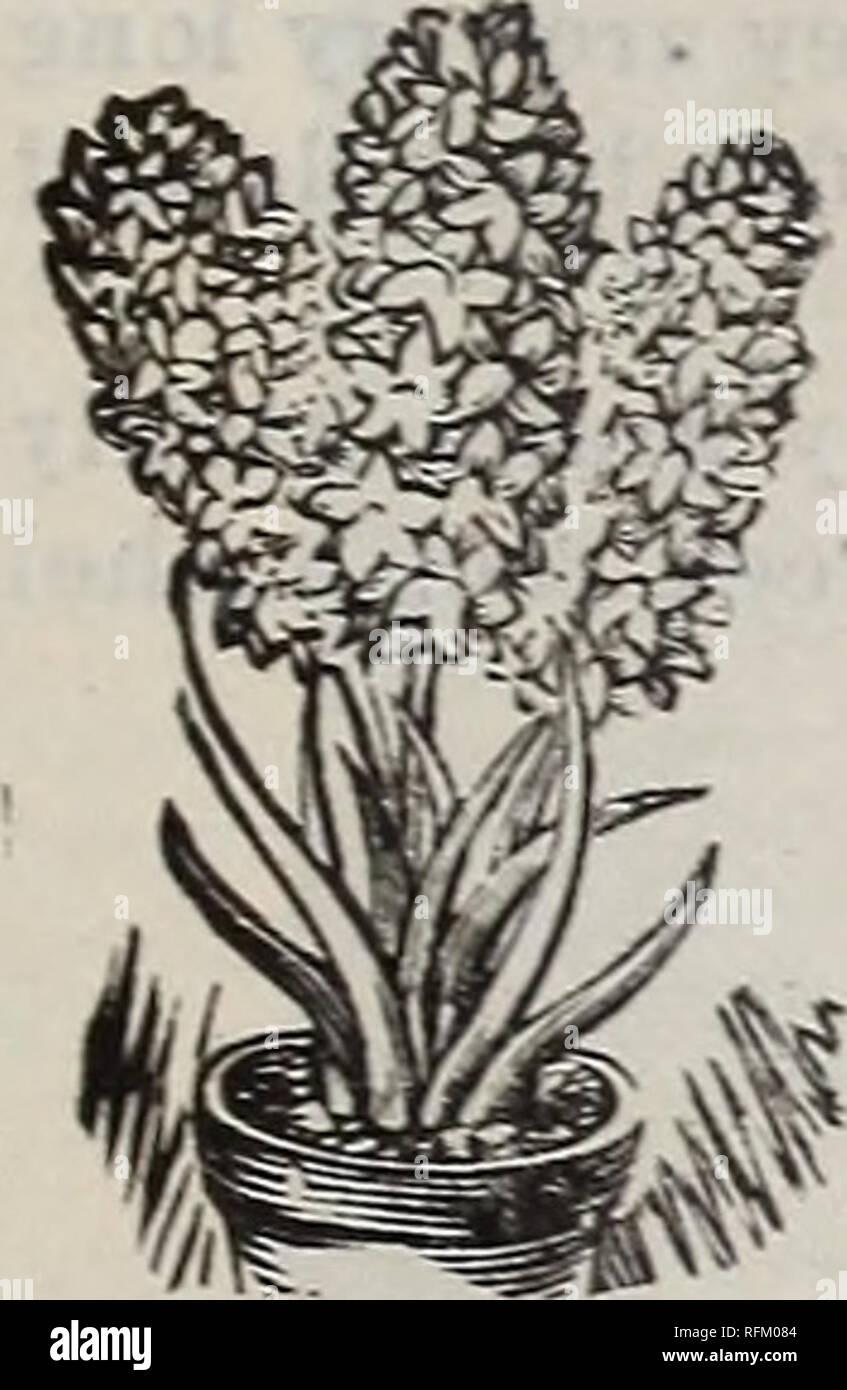 Legumes A Mettre Dans Le Jardin l'henry philipps et mettre en Œuvre des semences co