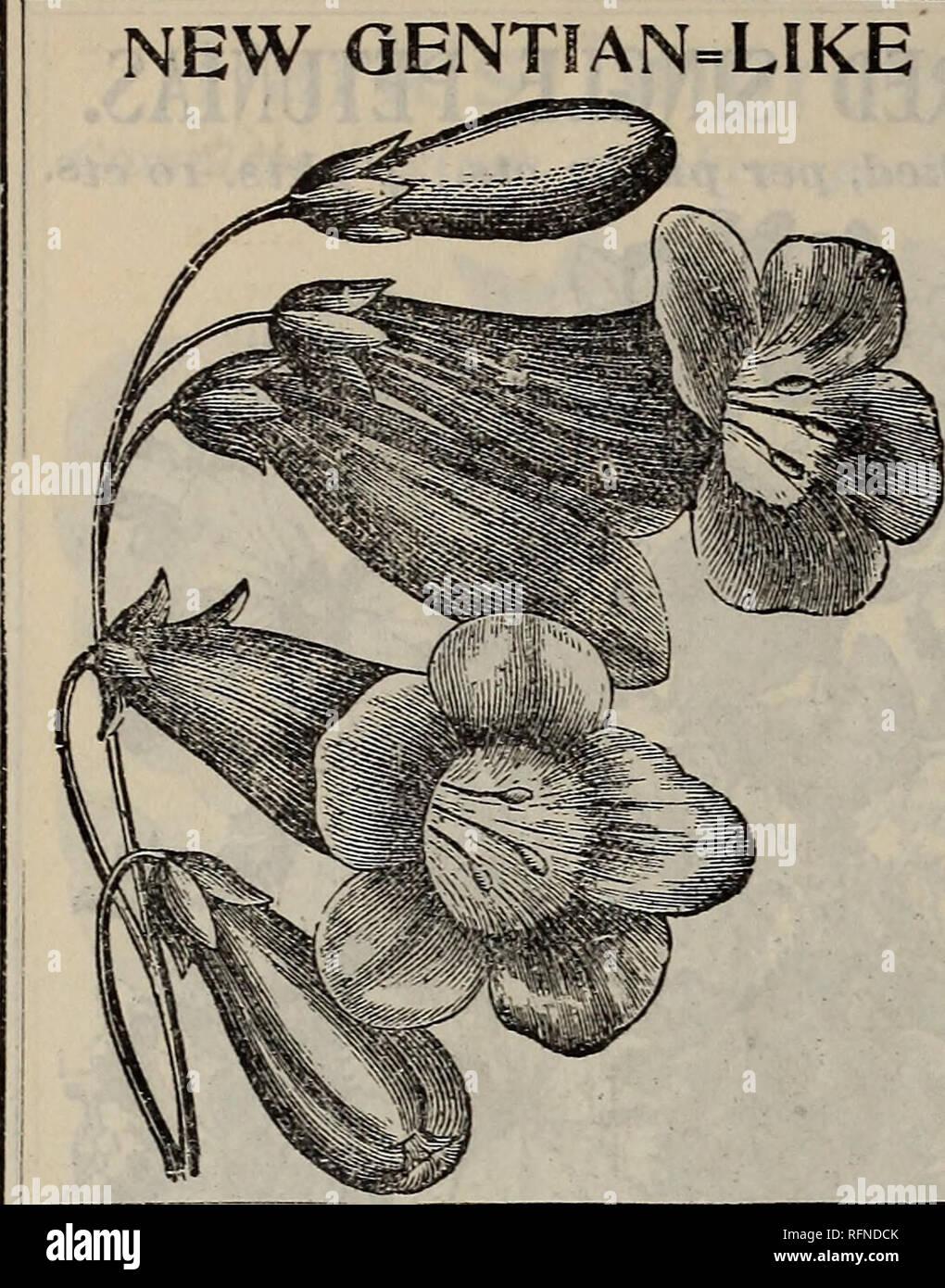 Jaune Enzian 150 Graines-Gentiana lutea-Précieux