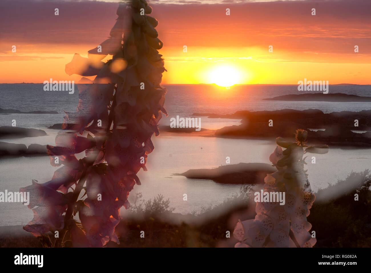 La Suède, l'usine, photosynthèse, les eucaryotes multicellulaires, World, la floraison, les plantes, les gymnospermes, fougères, plantes vertes, la photosynthèse, les chloroplastes, Photo Stock