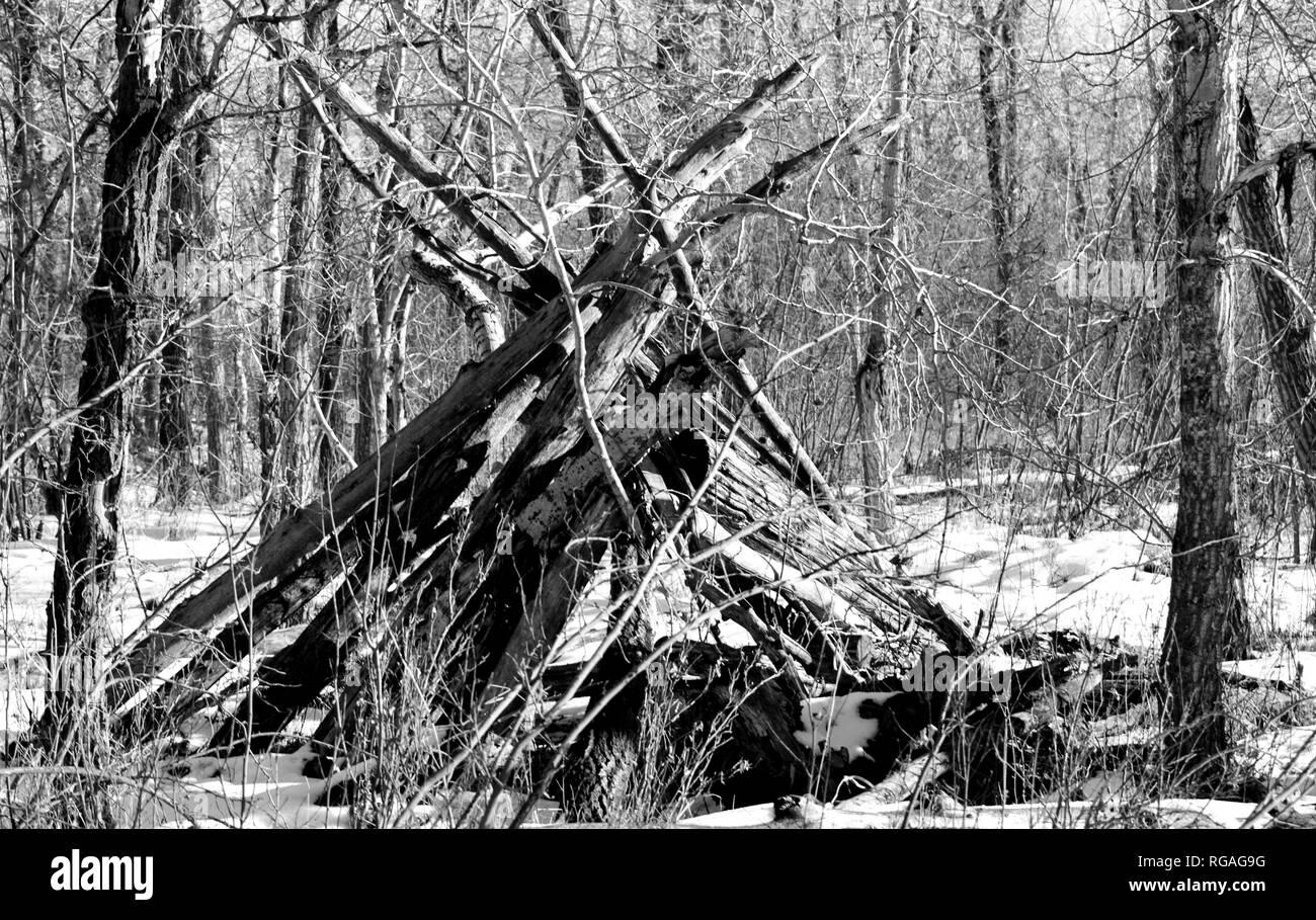 L'âme d'un arbre n'est pas perdu une fois qu'il tombe; elle devient la forme d'art de la nature. Photo Stock
