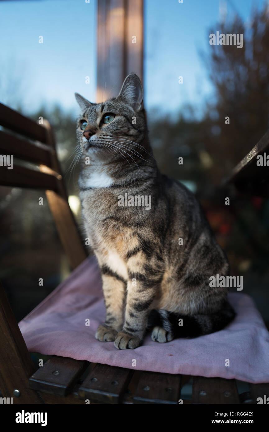 Chat femelle à poser et à la las. Photo Stock