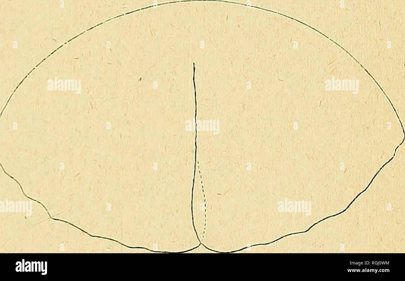 Petite taille 20 cm en bouleau s/éch/é au four en bois dur journaux Environ chemin/ées rapide Livraison gratuite Parfait Bois de chauffage pour petite Log-burners et petite Gravure sur bois