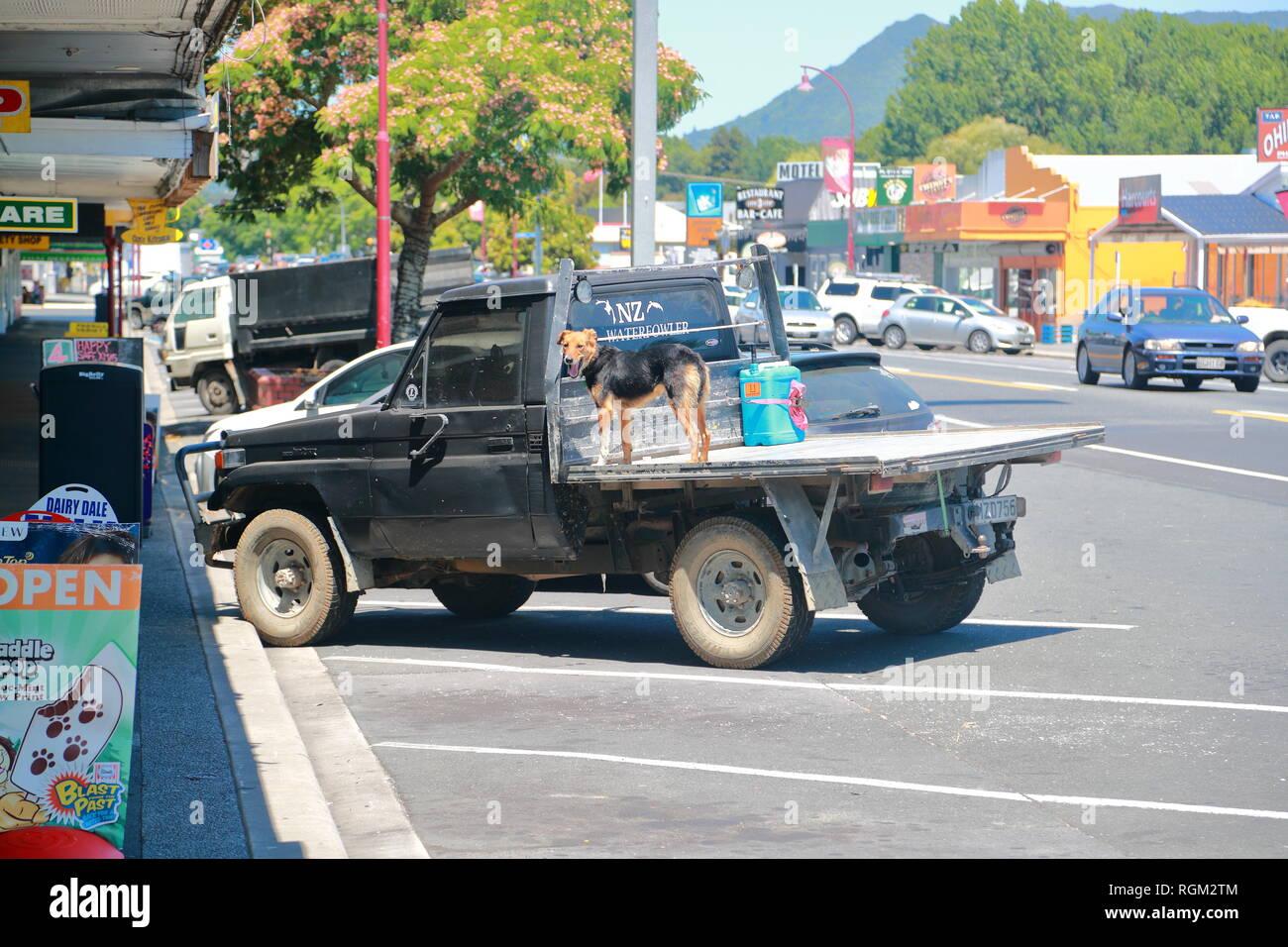 Un propriétaire stationné sa camionnette avec son chien sur la baie de chargement de Paeroa, Nouvelle-Zélande Photo Stock