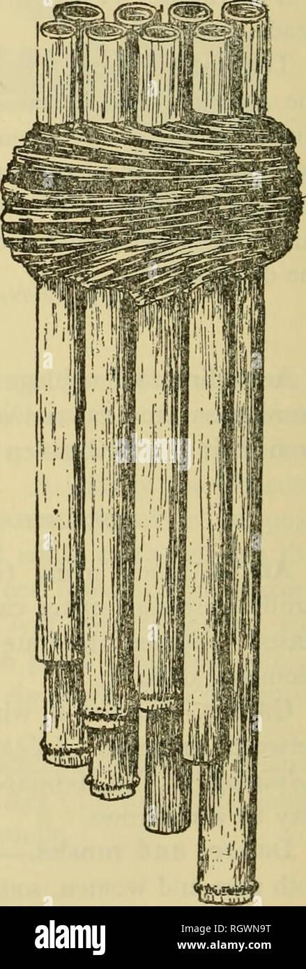 . Bulletin. De l'ethnologie. Figure 46.-Guaporc les instruments de musique. Gauche: Amniapd trompette. En haut, à droite: Guaratdgaja au sifflet oiseau imitateur. En bas, à droite: panpies double bras. (Toute l'}4 taille réelle.) (d'après un dessin de Snethlage, 1939.). Veuillez noter que ces images sont extraites de la page numérisée des images qui peuvent avoir été retouchées numériquement pour plus de lisibilité - coloration et l'aspect de ces illustrations ne peut pas parfaitement ressembler à l'œuvre originale.. Smithsonian Institution. Bureau of American Ethnology. Washington: G. P. O. Photo Stock