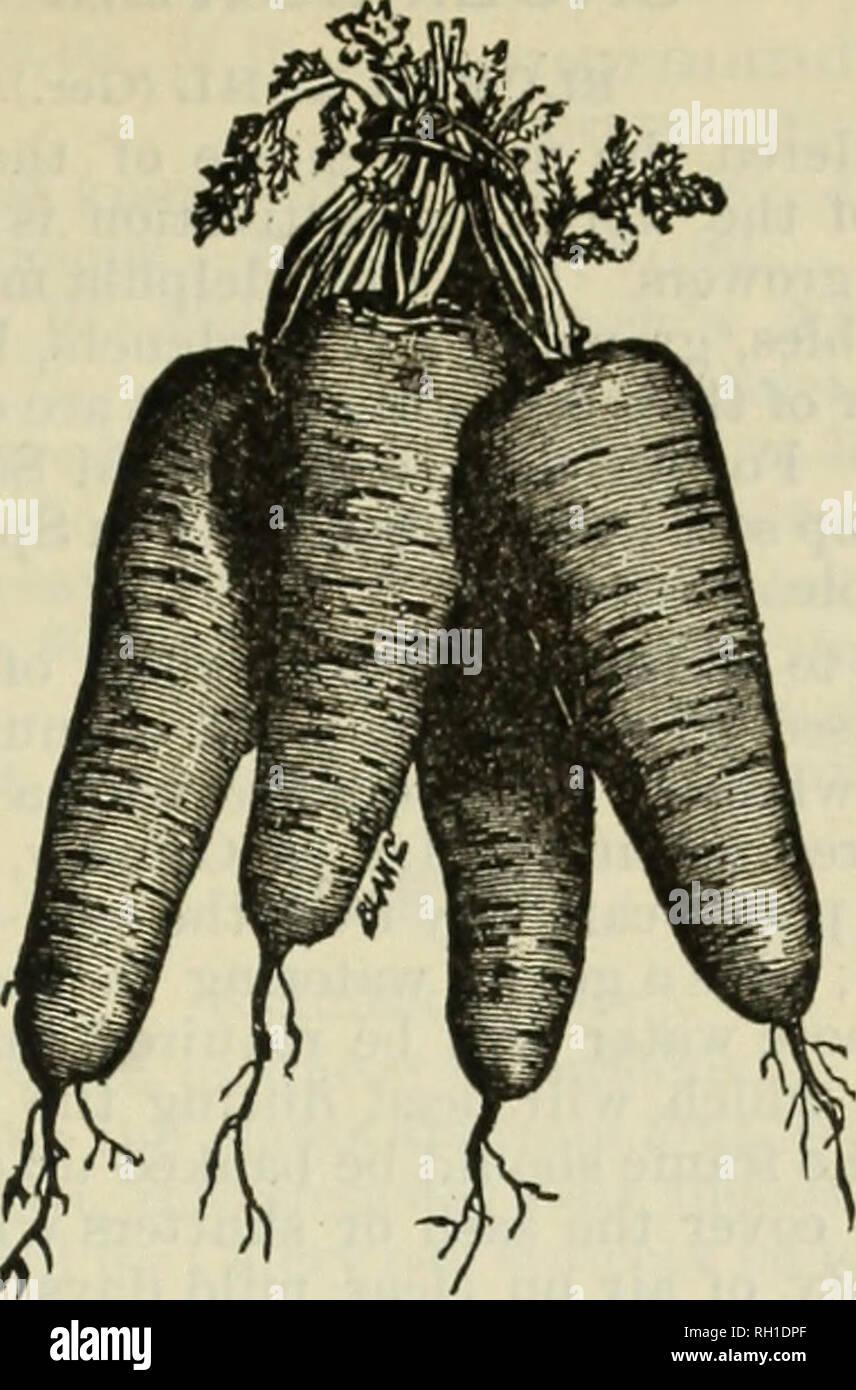 Jardin, terrasse Légumes-Grosses graines-paquet illustré-Carotte ...