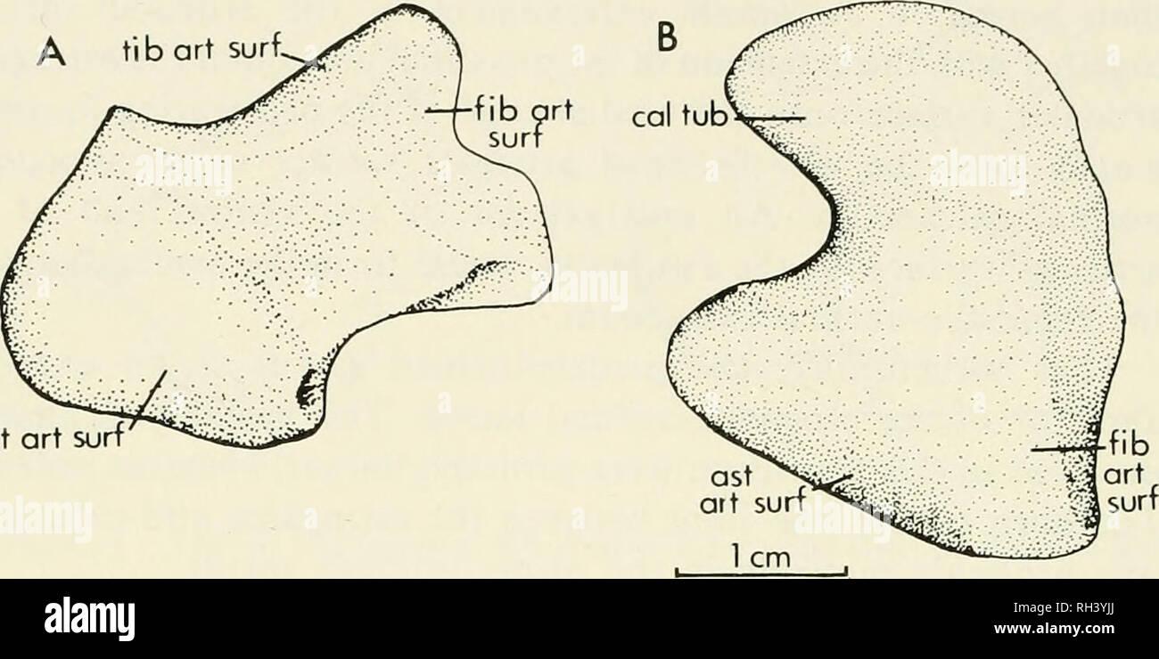 cellules d'amour/cellules de romance/datation d'ADN