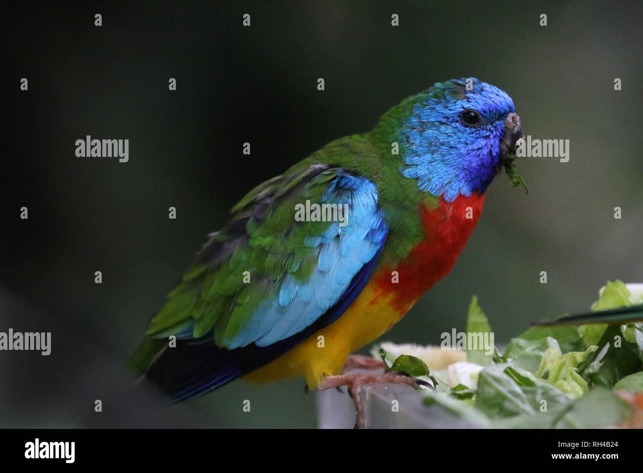 Petites multicolores au zoo du perroquet Banque D'Images