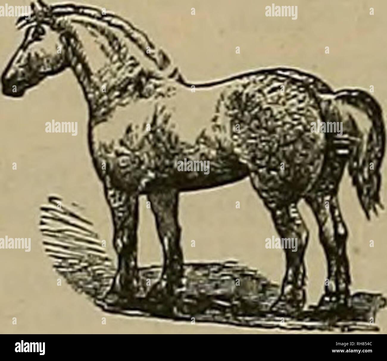 """. Source et sportsman. Les chevaux. 5e Grand Breeders' Association Salii F. J. BERRY &AMP; CO.'S Union Stock TTa,r<un.ss, Chioaga 7 â ¢""""' T-f'O sur vente privée. a également fait de la couvée et la race- CHEVAUX, et sélectionnera les étalons et les juments de sang pour l'exportation. Avoir une connexion rapide entre les obtenteurs dans toutes les colonies australiennes tbe et aussi la réputation d'un juge de stock de sang, les acheteurs peuvent se fier à leurs intérêts d'avoir une attention spéciale. H A. THOMPSON, LateO. BRUCE LOWB I 9 Bllerh St., Sydney. Snnth Nouvelle Galles. Octobre 26, 27, 28, 29, 30 et 31,1891. Standard-Bred. Le bilan de l'ordre le plus élevé Banque D'Images"""