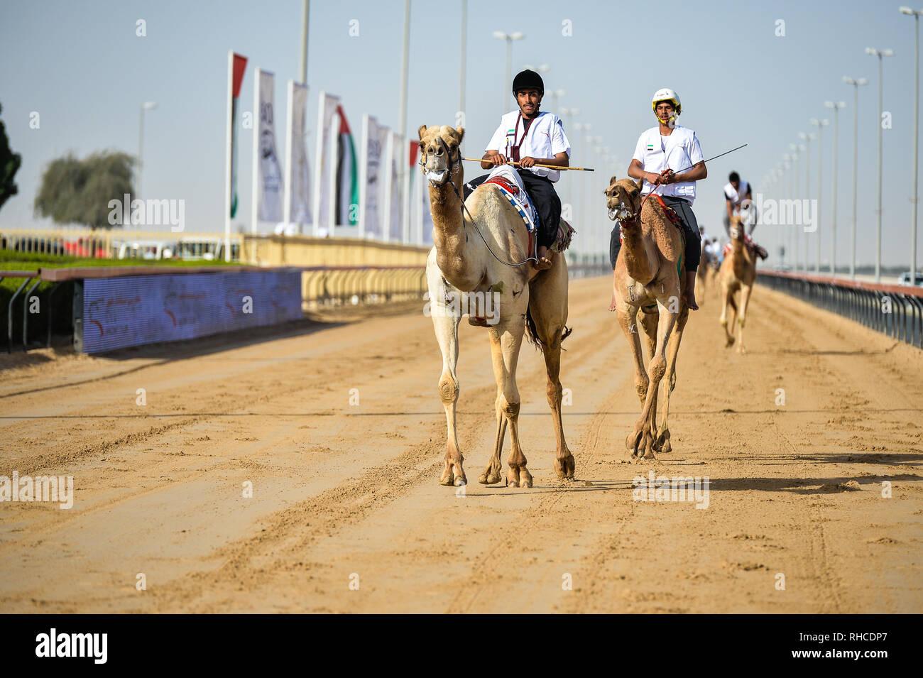 Dubaï, Émirats arabes unis, 2 février 2019. Approche des jockeys de la ligne d'arrivée dans le Prince héritier de Dubaï 2019 Festival des courses de chameaux. C'est la 2e édition du festival annuel, organisé sous le patronage de Son Altesse Sheikh Hamdan Bin Mohammed Bin Rashid Al Maktoum, Prince héritier de Dubaï Crédit: Feroz Khan/Alamy Live News Photo Stock