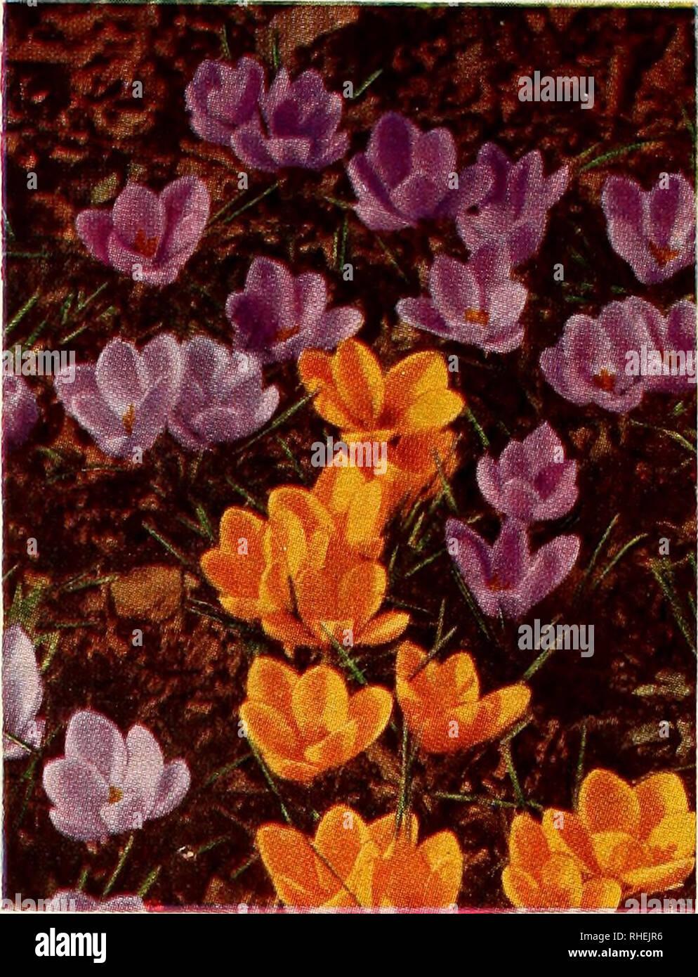 Plante A Planter En Septembre bolgiano sélectionné de bulbes et plantes pour l'automne