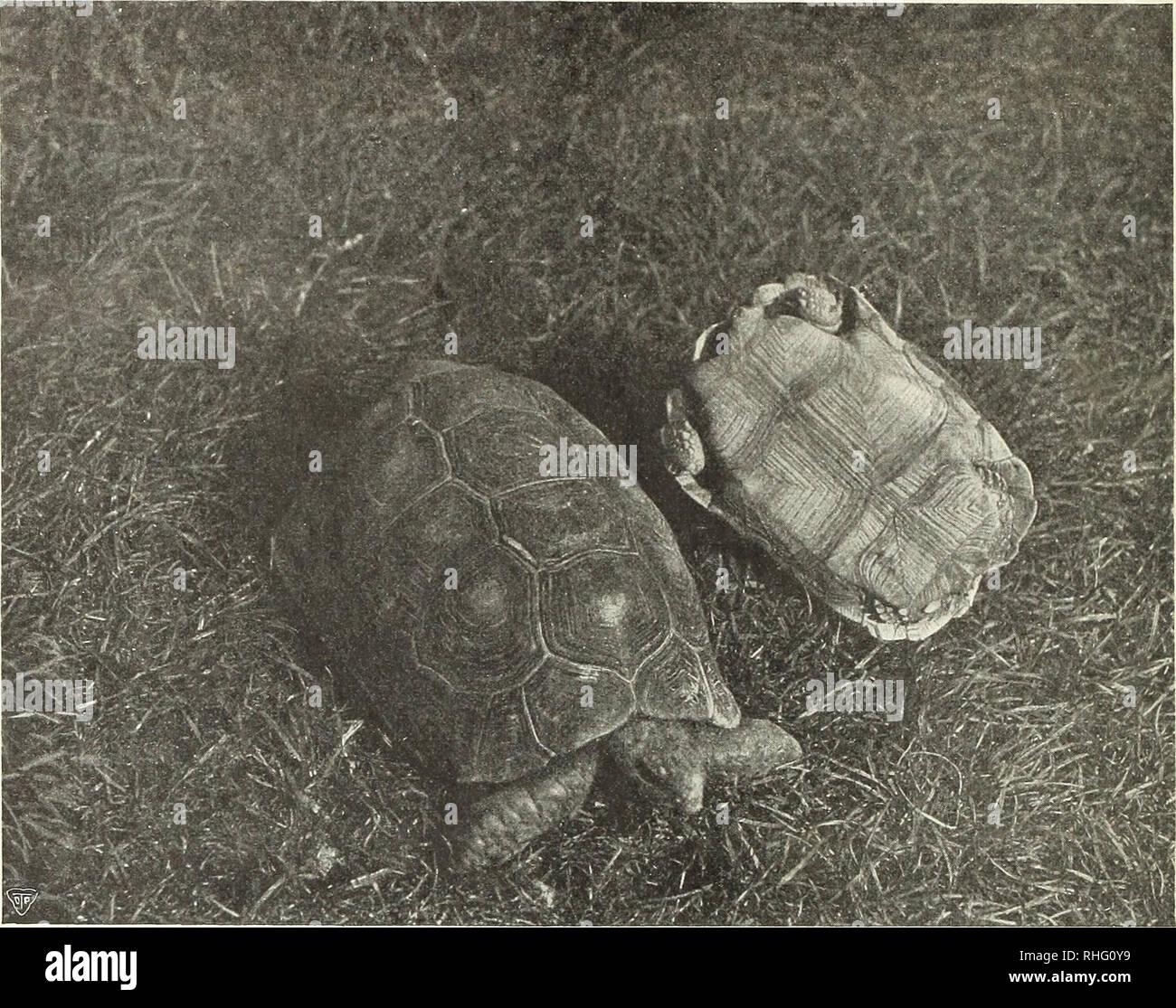 Stellung schildkröten Schildkröte