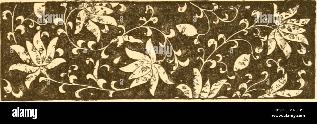 . Les chansons sur Worcester. Par Harry Nelson Leverett, chants d'oiseaux; h. VII. Chanteurs en plein été. Worcester, 2 juillet 1887, STH. Cher Monsieur l'éditeur, - avec la plupart des oiseaux, leur chant est limitée à la saison de l'accouplement et de la nidification. Après les jeunes oiseaux ont quitté le nid, les parents généralement devenir silencieux. Qui a jamais entendu la chanson joyeux, jaillissant du goglu au mois d'août, ou même après le milieu de juillet? Un tel événement serait en fait un étrange et inexplicable phénomène- phe, pour le goglu font toujours très attention à ce que leurs jeunes et à part entière de la ne Banque D'Images