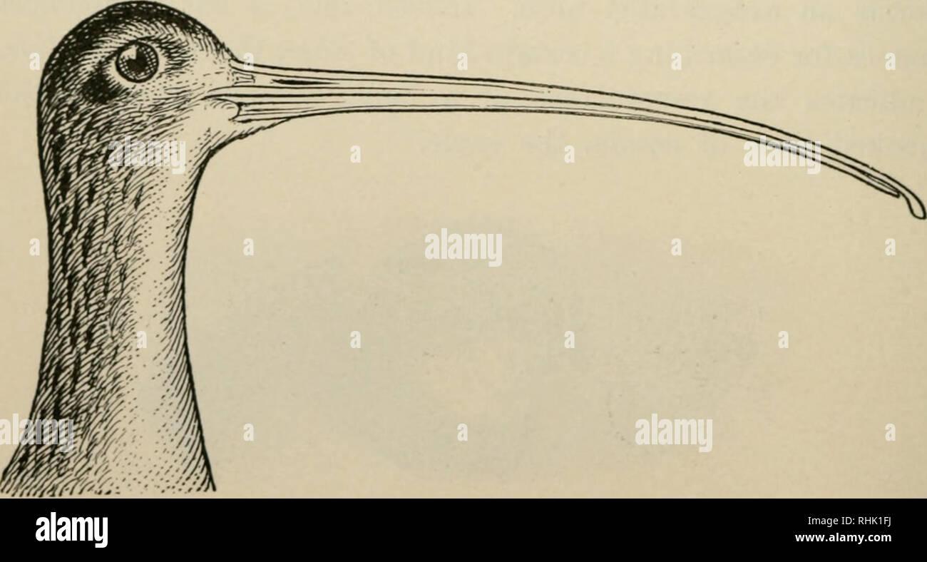 Le Livre Des Oiseaux Les Oiseaux 100 Structriie