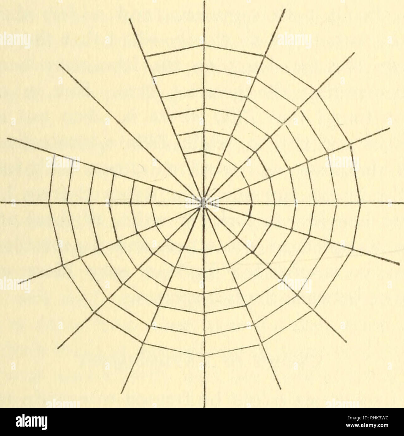 . La biologie des araignées. Les araignées, les insectes. La distribution de le chercher ailleurs. D'asile après les araignées rencontrez avec exactement le même état de choses. Dans la plupart des localités en Angleterre, près d'une centaine d'espèces d'araignées peuvent être trouvés sans grande difficulté dans une saison ou deux. Plusieurs des espèces plus communes sont trouvés dans les hangars et d'équitation à la maison, et de se produire à nouveau, mais avec des ajouts, dans la véranda et la serre. L'exécution dans les champs, et a beaucoup d'araignées-loups, mais pour remplir le sondage de cette famille seulement, les banques de. Fig. 75.-Web de Zilla. Les rivières et ruisseaux, les dunes un Photo Stock