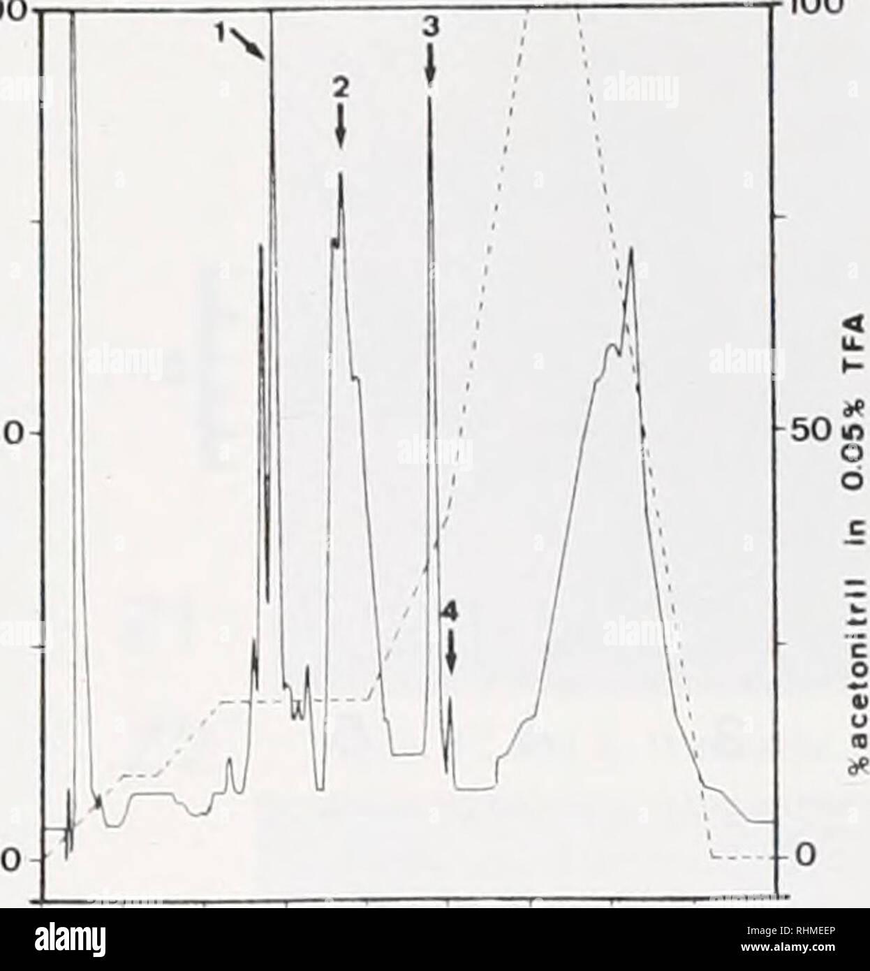 . Le bulletin biologique. Biologie; zoologie; biologie; biologie marine. (NaCl) 02. O - 0 40 12 80 O Nombre de fractions • ^M B I B1 R2 m? Mi 10 20 30 4O c b c d e f g h figure 5. Chromatographie de purification de RI, R2. m J, M2, M3 et les protéines. A. CM-cellulose séparation de l'ensemble des protéines; B. la CLHP de purification de protéines éluées dans la fraction I par la centrale A; C. le contrôle des protéines par électrophorèse punned: lane c, protéine de RL 11 fraction de un panneau; lane d. protéine R2 à partir de la fraction d'un groupe III; lane f, protéine ml de crête 3 de bord B: lane g. protéine m2 à partir de 4 pics de bord B, couloir Banque D'Images
