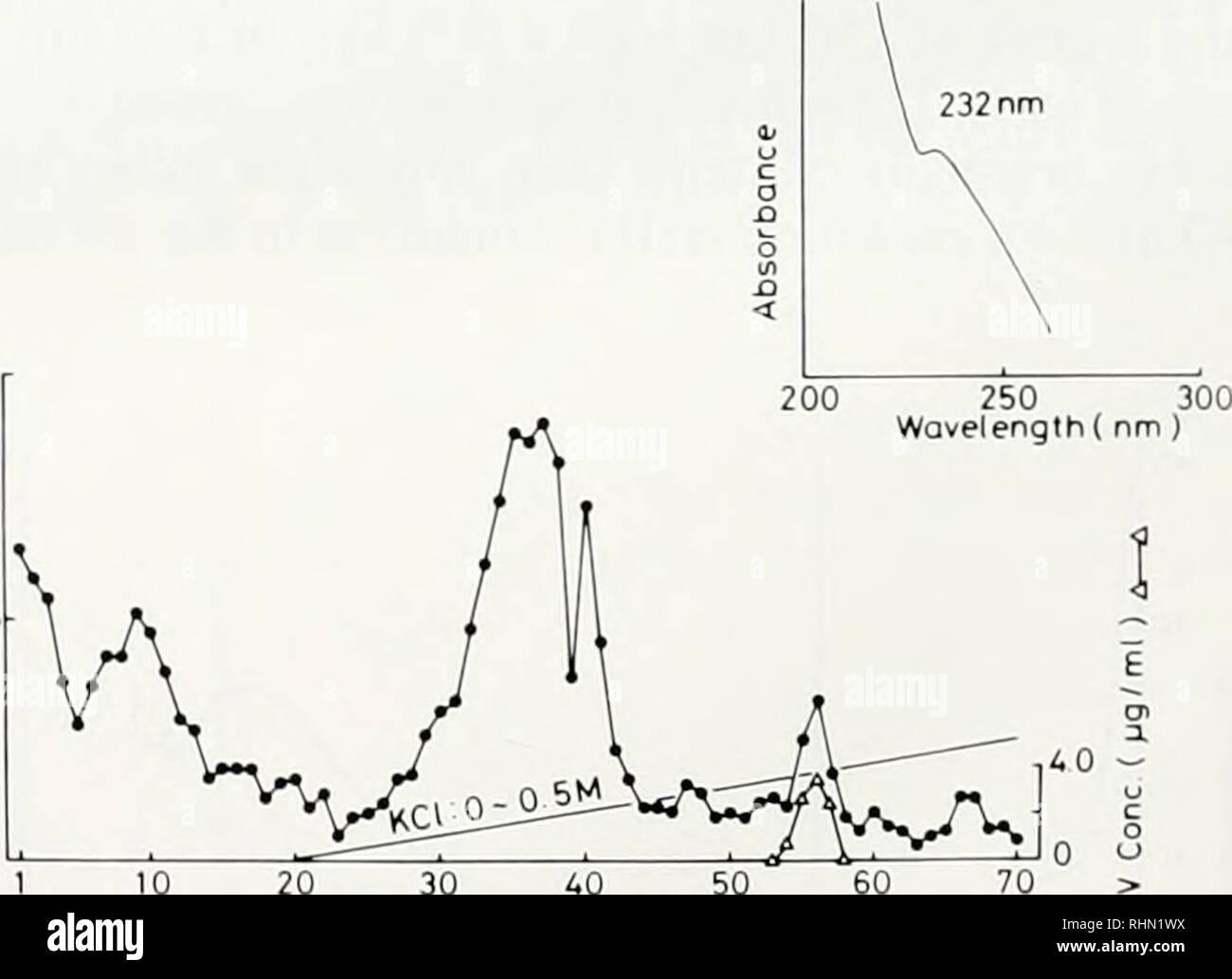 . Le bulletin biologique. Biologie; zoologie; biologie; biologie marine. 15 20 25 30 Nombre de fractions F'igure 6. Profil d'élution de l'homogénat cellulaire du sang de Ascidia aliixlon sur Sephadex G-15 La chromatographie sur colonne. Boulettes de cellules du sang (49,7 mg) ont été homogénéisés dans 10 mA/ glycine-HCl solution à pH 2,3. L'homogénat (1.2 ml) a été chargé sur une colonne (1,5 cm 0 x 48 cm) et élué avec la même solution tampon dans 3 ml de fractions. Vt et Vo de la colonne sont de 85 ml et 39 ml, respectivement. Ve d'vanadobin est de 63 ml. L'encart montre le spectre UV de la fraction fraction de pics (21). Absolue Banque D'Images