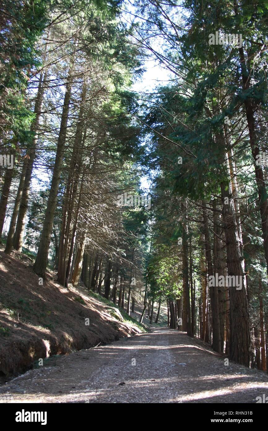 De grands arbres immergés dans la nature luxuriante des Alpes Apuanes Photo Stock