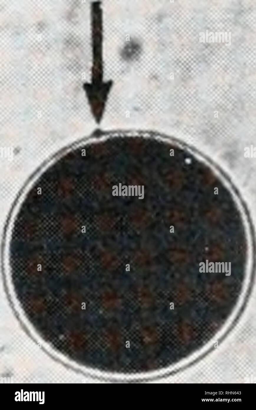 . Le bulletin biologique. Biologie; zoologie; biologie; biologie marine. J • figure 1A-1L. Les micrographies montrant la lumière réaction corticale de P. aztecus œufs de l'étape n, grâce à la libération de la globule polaire (flèche), à la formation d'une membrane d'incubation. Bar = 200 /de l'urne. Une fois que les tiges sont expulsés, ils forment une couronne autour de l'œuf (Fig. IE). Cette demeure que l'accouplement corona gonfler et commencer à se dissiper (Figs. 1G, 1J). Dans un délai de 5 à 7 min après le début de la réaction, les tiges. Veuillez noter que ces images sont extraites de la page numérisée des images qui peuvent avoir être Photo Stock