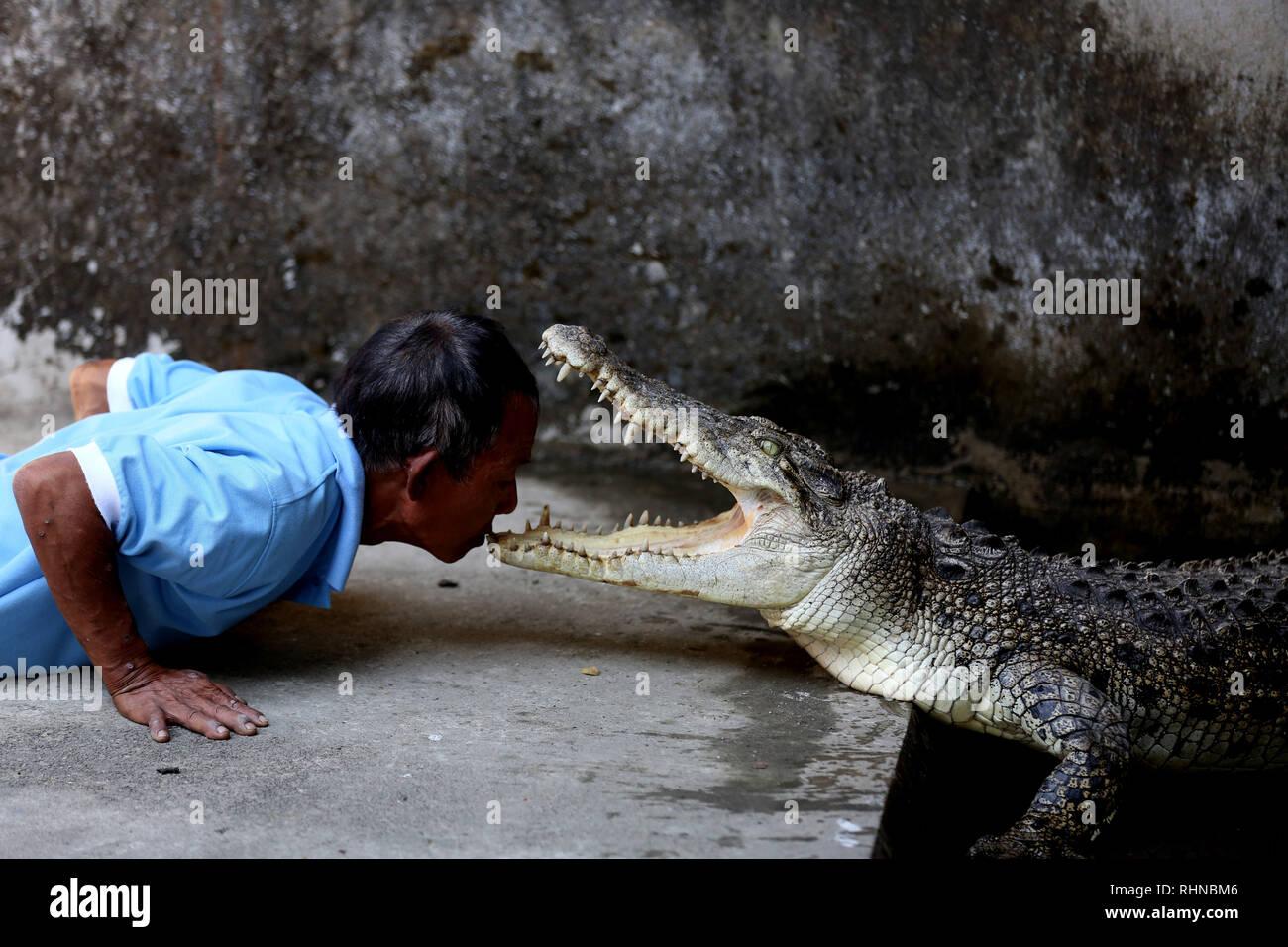Yangon, Myanmar. 3, 2019. Un membre du personnel interagit avec un crocodile à la ferme aux crocodiles de Thaketa à Yangon, Myanmar, le 3 février 2019. Situé dans le canton de Thaketa Thaketa, Yangon, la ferme aux crocodiles est exploité avec un total de 16 membres du personnel et est une maison à plus de 500 crocodiles d'eau salée de toutes tailles. Credit: U Aung/Xinhua/Alamy Live News Photo Stock