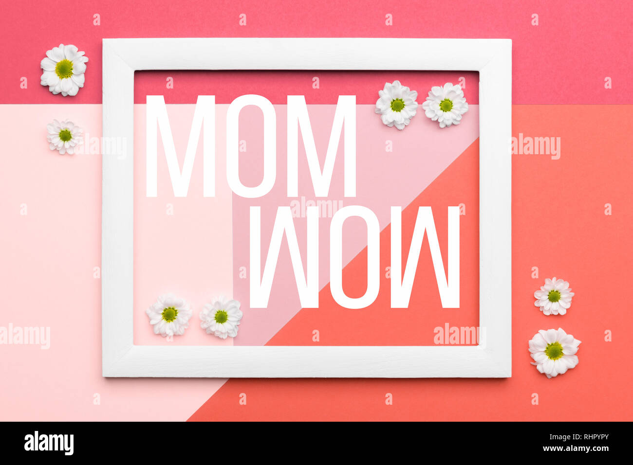 Heureuse Fête des coraux vivants et rose pastel Arrière-plan. Télévision Floral minimalisme laïcs carte de vœux. Photo Stock