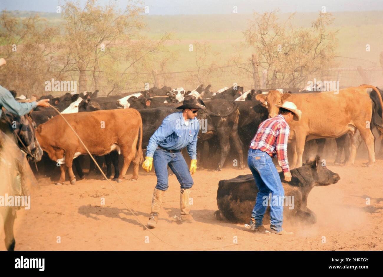 Texas Cowboys site de rencontre sites de rencontres autour de JHB