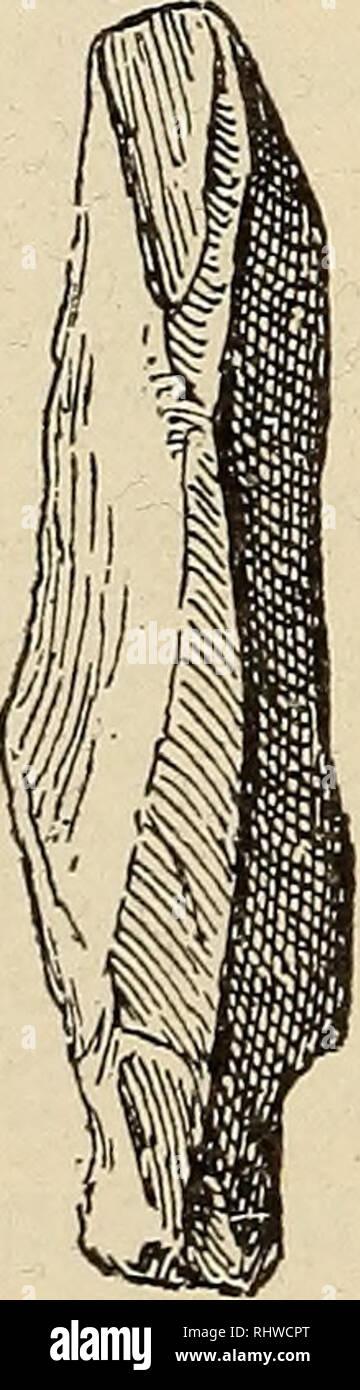 . 08 Bergens Musées aarbok. 18 A. W. Brøgger. [Nr. 2 Plekkepilen opstaat er naturligvis i en flintkultur og den er formen enkle à finde overalt bien sûr. Un forhindrer sådanne hommes ikke W:. d. Veuillez noter que ces images sont extraites de la page numérisée des images qui peuvent avoir été retouchées numériquement pour plus de lisibilité - coloration et l'aspect de ces illustrations ne peut pas parfaitement ressembler à l'œuvre originale.. 08 Bergens Museum. Bergen: Le Musée Photo Stock