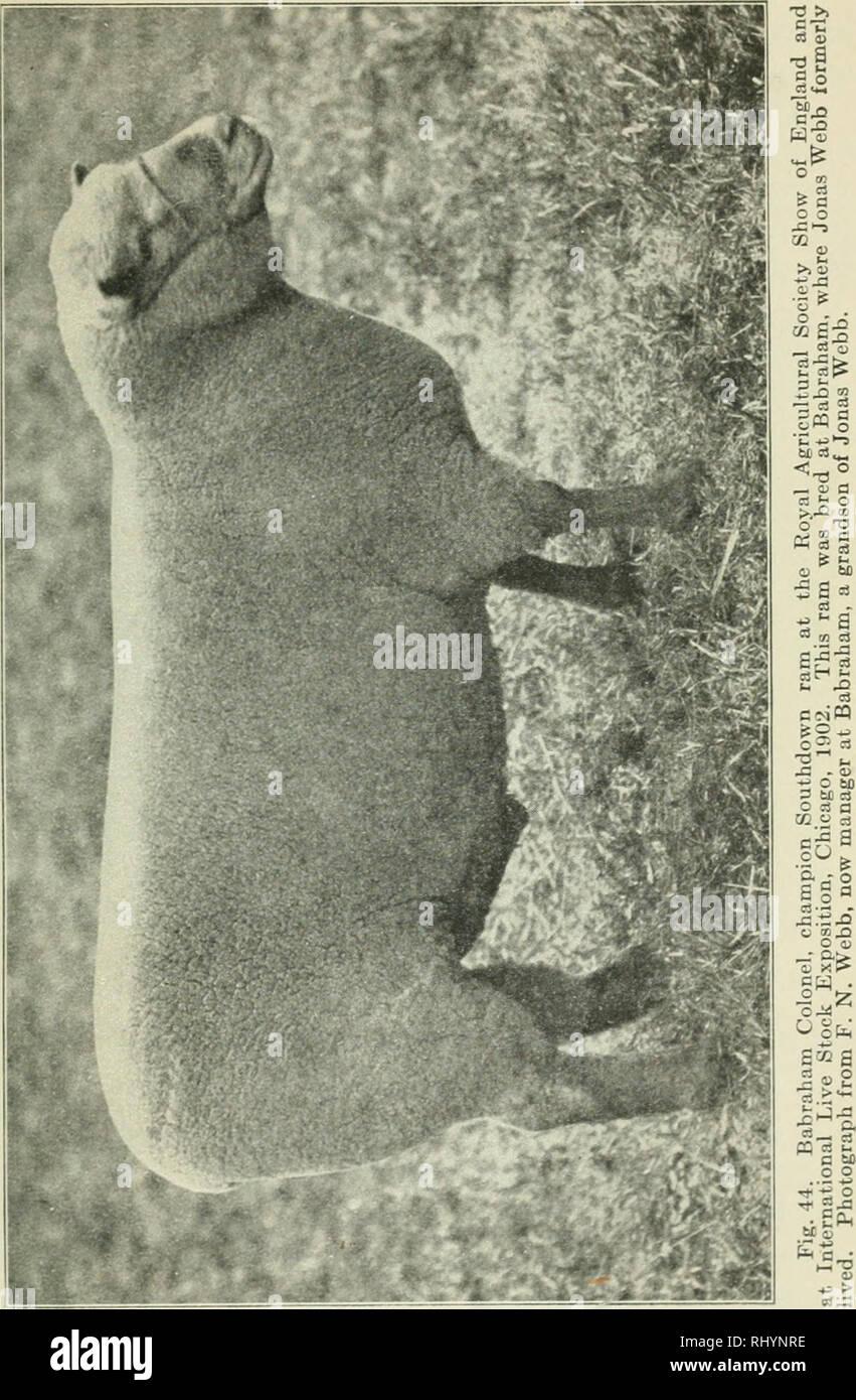 . Débuts dans l'élevage. Le bétail, la volaille. Les races de mouton 81. Veuillez noter que ces images sont extraites de la page numérisée des images qui peuvent avoir été retouchées numériquement pour plus de lisibilité - coloration et l'aspect de ces illustrations ne peut pas parfaitement ressembler à l'œuvre originale.. Plumb, Charles Sumner, 1860-1939. Saint Paul, Minn.: Webb Pub. Co. Banque D'Images