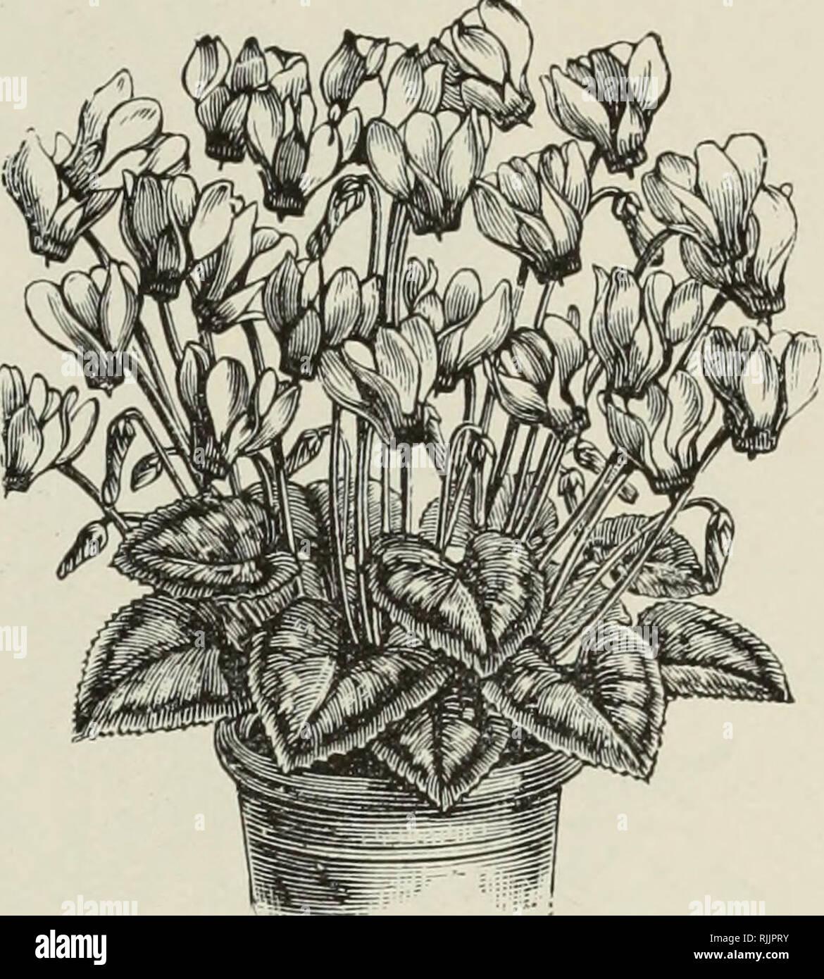 D\'automne Beckert Liste des bulbes : 1899. Catalogues ...