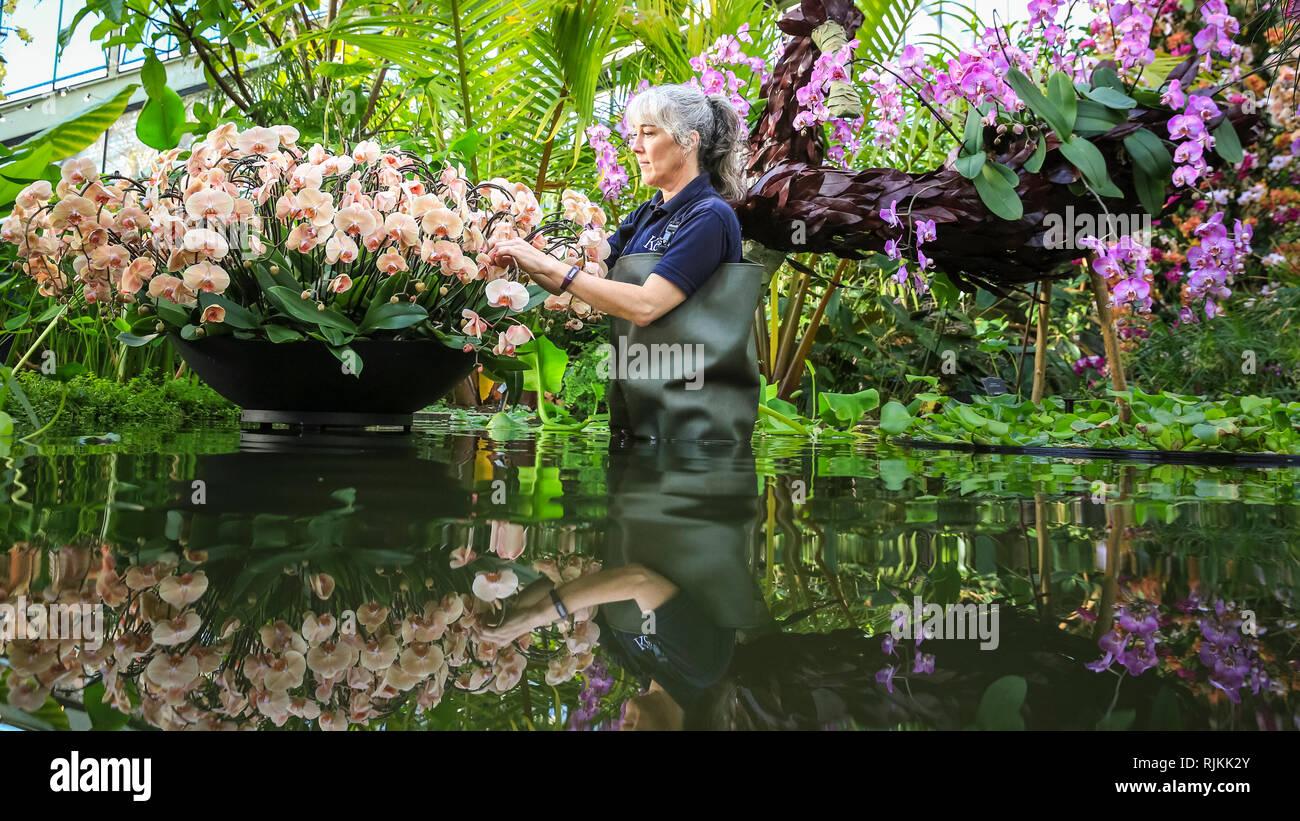 Kew Gardens, London, UK, 07th Feb 2019. Horticulteur Kew Sal filtre la serre l'étang et met la touche finale à la superbe affiche de l'horticulture. Cette année, le Festival a pour thème Orchidée Kew sur le pays de la Colombie, avec belle affiche avec ovver 6 200 orchidées orchidées colorées et des centaines d'autres plantes tropicales, qui représentent des aspects de la faune et de la culture colombienne. Credit: Imageplotter News et Sports/Alamy Live News Photo Stock