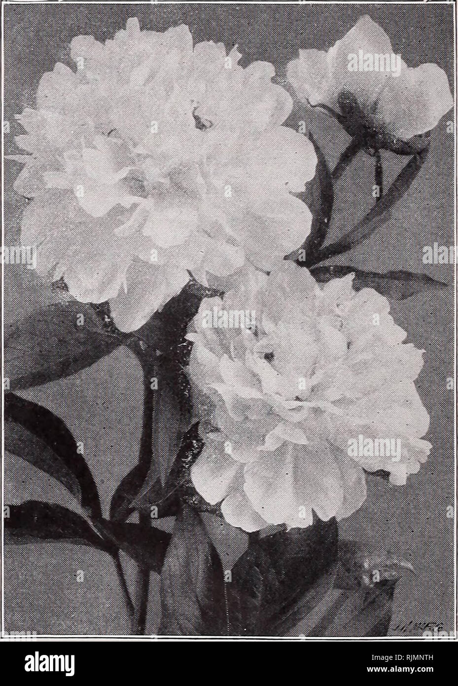 Les graines et bulbes Beckert. Catalogues commerciaux Seeds ...