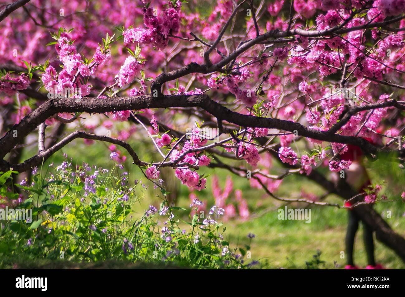 Fleurs rouge naturel avec arbres Banque D'Images