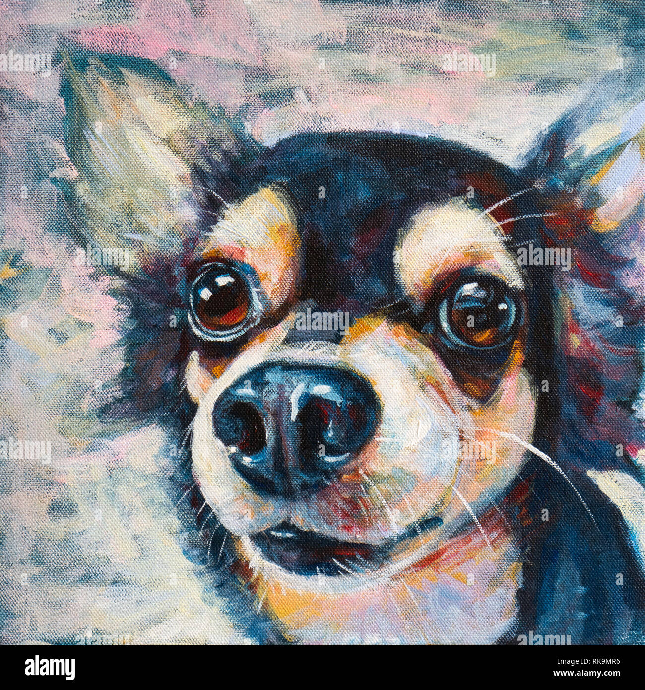 14f0111967863 Adorable Chihuahua Photos   Adorable Chihuahua Images - Alamy