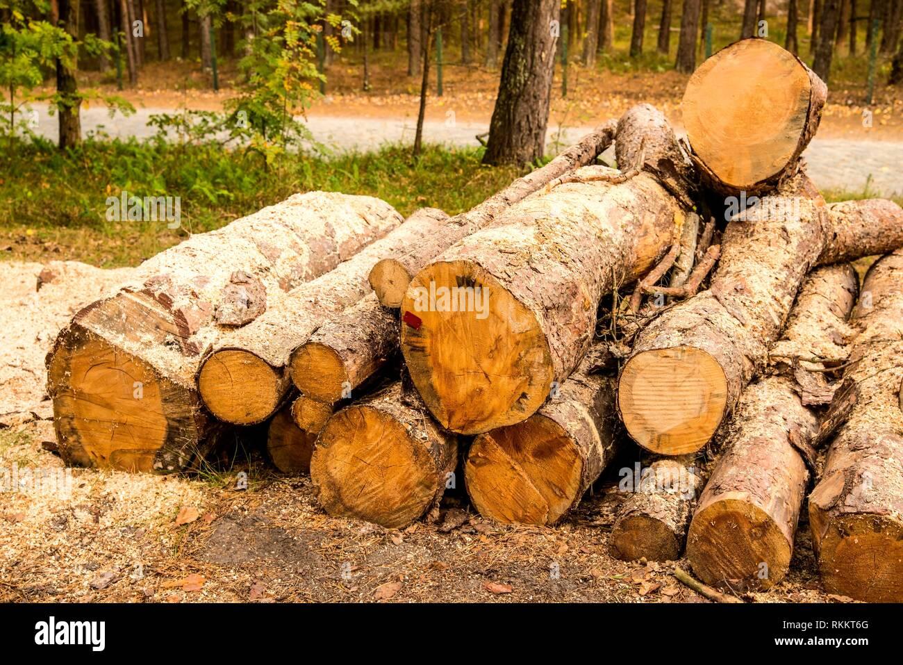 Bois Bois, striée dans une forêt. Photo Stock