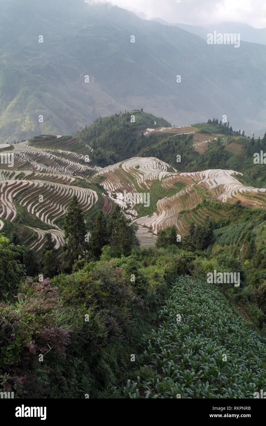 Une section de la spectaculaire Longji- Dragon's backbone Rice Terraces à Ping'An, Longshen Comté. Couper dans le relief du terrain et exploité par ma Photo Stock