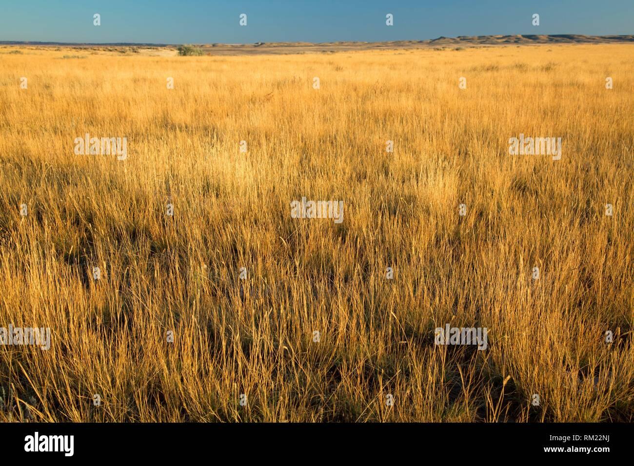 Les prairies, comté de Trésor, au Montana. Photo Stock