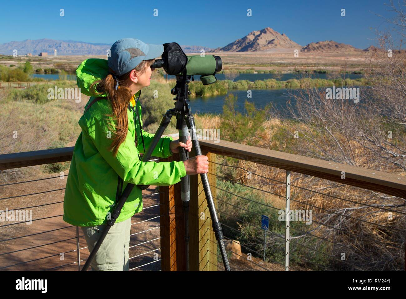 Birder avec lunette, Ville d'Henderson Bird Viewing Preserve, Nevada. Photo Stock