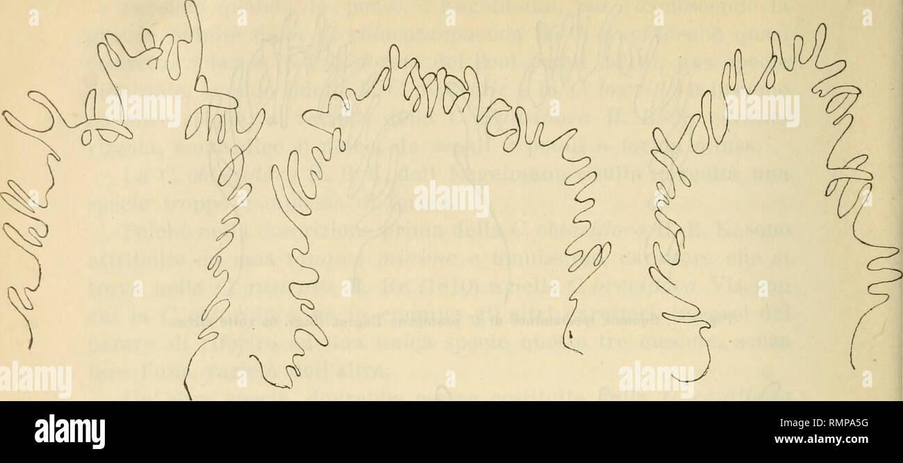 . Annali di botanica. Les plantes; les plantes. 368. Fig. 9. - Ipostaminee Squame di C. racenosa var. chiliana Bert. (Subst. 35 vole vers). Poiché varie de rusty nail tr è parlé della introduction in Italia della C. racemosa, var. chiliana e della ch. Gronoìni Wild, e poiché vi é ancora qualcuno che nel diriger autour riferire insiste un C. racemosa, la cuscuta grossa infestante le nostre colture foraggere, é un bene fermarci anche su queste due cuscute.. Veuillez noter que ces images sont extraites de la page numérisée des images qui peuvent avoir été retouchées numériquement pour plus de lisibilité - coloration et l'aspect de ces illu Photo Stock