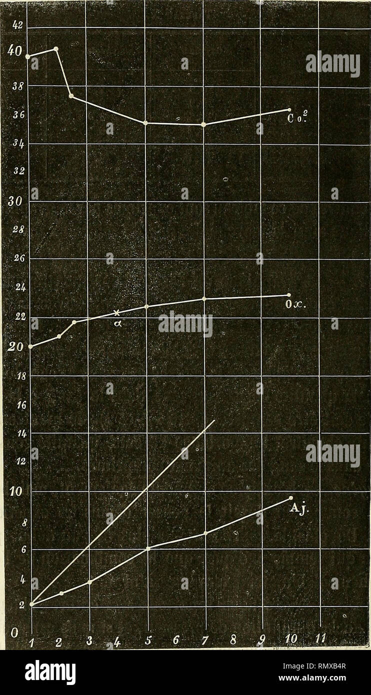 . Annales des sciences naturelles. Zoologie, biologie. 62 P. HUIT. devenant presque horizontale à partir de 5 atmosphères. C'est ce que montre le graphique IX (ligne ponctuée); les ordon- Graphique VIII.. nées expriment les proportions d'oxygène, la pression est mar- quée sur les abscisses (chiffres de la ligne inférieure, verticales ponctuées). ARTICLE N° 1. .. ..__.. Veuillez noter que ces images sont extraites de la page numérisée des images qui peuvent avoir été retouchées numériquement pour plus de lisibilité - coloration et l'aspect de ces illustrations ne peut pas parfaitement ressembler à l'œuvre originale.. Milne-Ed Photo Stock