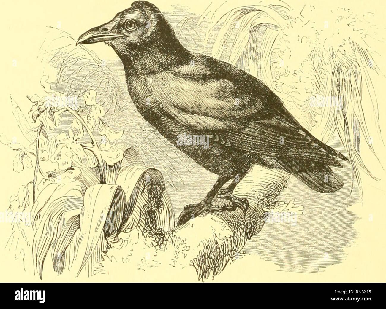 Animer La Creation Populaires Edition De Notre Monde Vivant Une Histoire Naturelle Zoologie Zoologie 306 Les