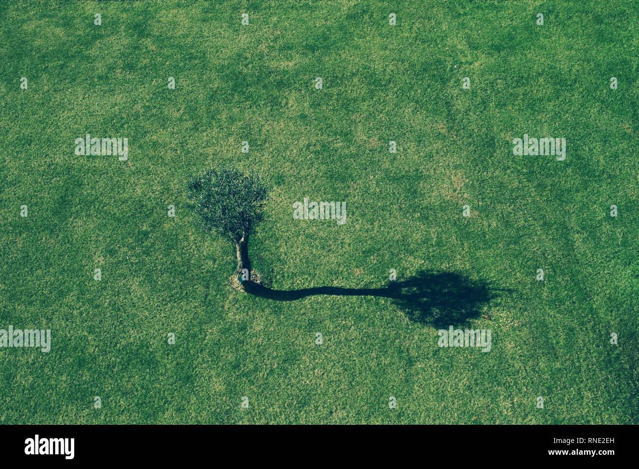 Un minimum d'image avec silhouette d'arbre unique sur un champ d'herbe au lever du soleil Photo Stock