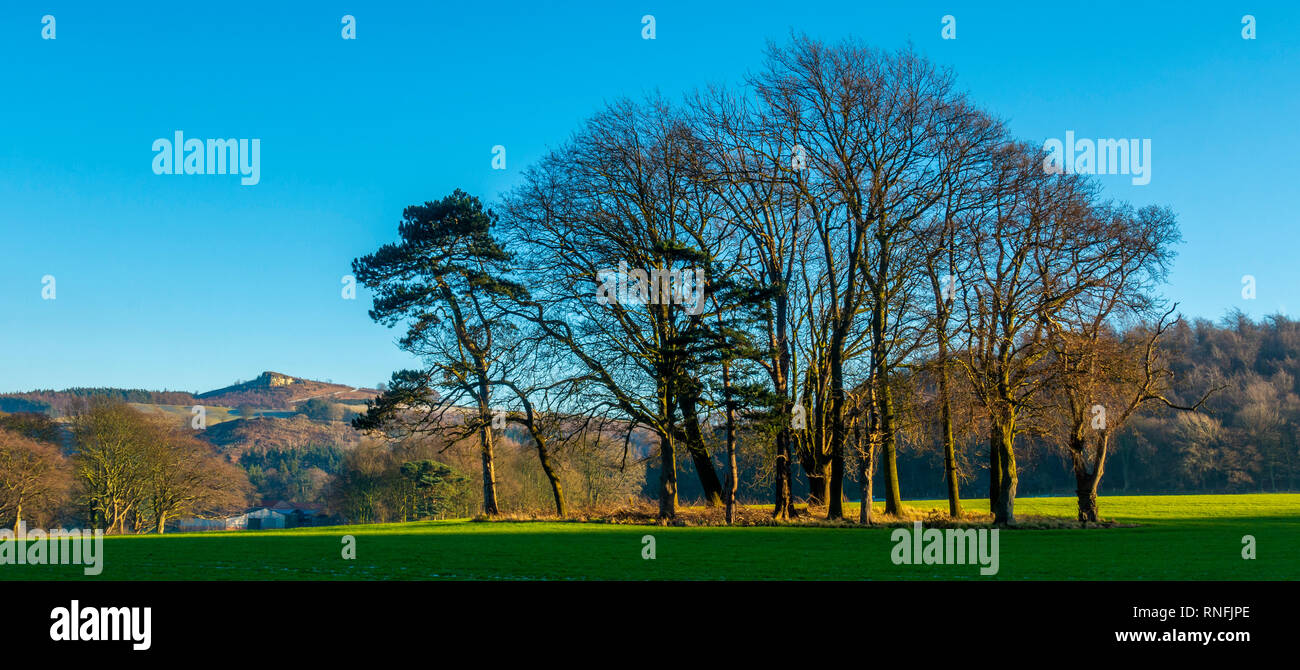 Bosquet d'arbres, Hutton, Guisborough, Cleveland, North Yorkshire Photo Stock