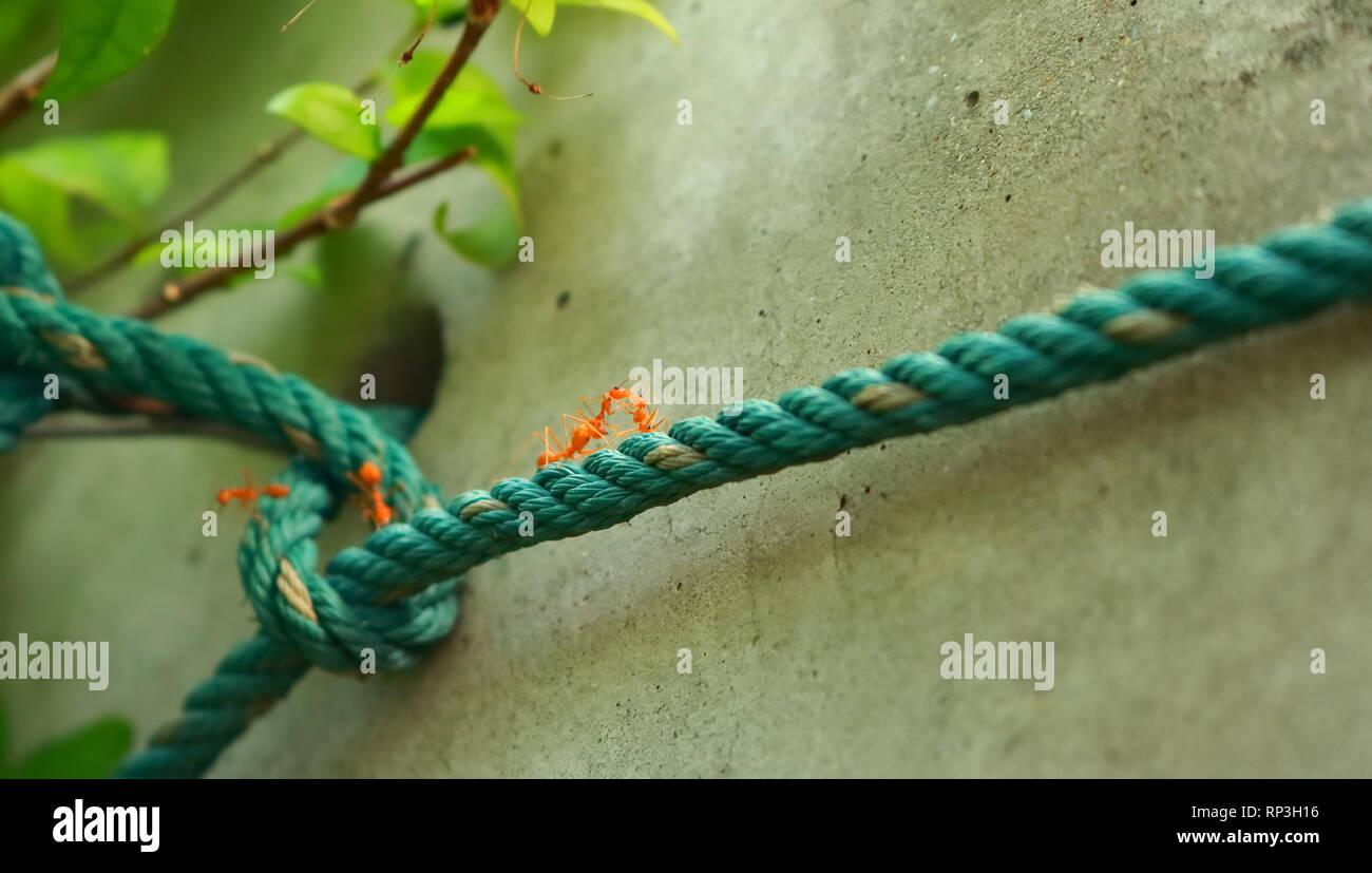 Libre de deux fourmis sur la corde Photo Stock