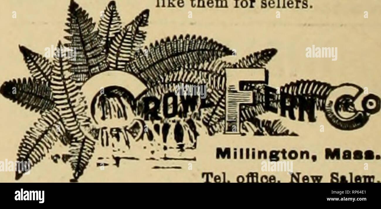 """. La fleuriste américain: un journal hebdomadaire pour le commerce. La floriculture; fleuristes. Roses, Œillets et toutes sortes de fleurs de saison en stock. ITACTIIIIS Com Illy C Gros nilli ri nnOlinUi isslon n:481 Wagtiington Florides St.. Buffalo. N. Y. Concessionnaire dans RupDli pour fleuristes""""s et fils! Ouvert de 7:00 à 8 A. M.:0O P. M. Le sud de smilax. 550 $ par caisse de 50 livres l'Essayer quand j'ou voulez Smilax. Ftrnt ou poignard fantaisie, 1,00 $ pour 1000. Dis- compter sur d'importantes commandes. Galax, bronze ou vert, 75C par 1000. Nouvelle récolte. Fetloonlng Laural meilleurs au monde, 4c, 5c et 6c par yd. Une fois utilisés, toujours utilisé et Banque D'Images"""