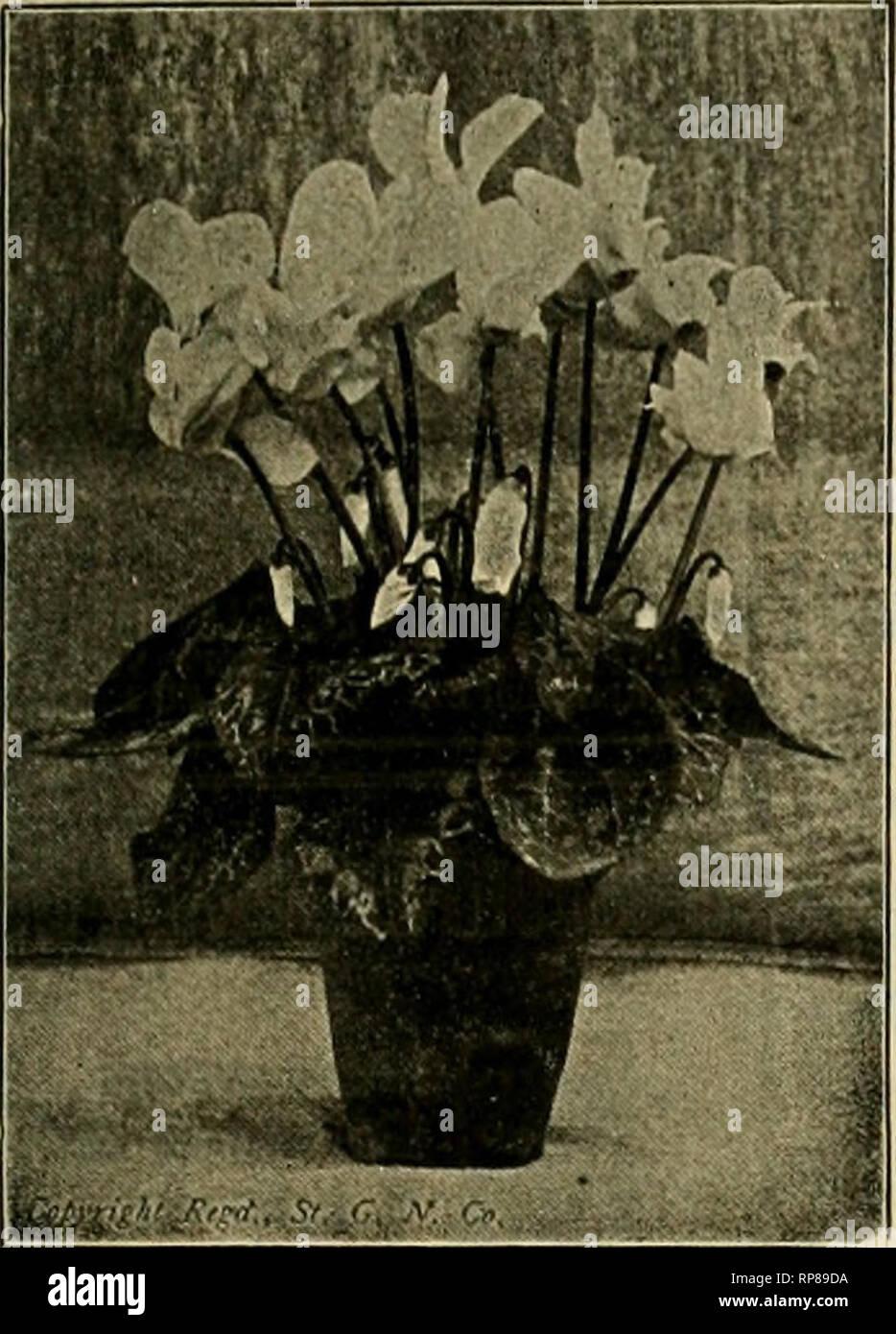 """. La fleuriste américain: un journal hebdomadaire pour le commerce. La floriculture; fleuristes. igog. L'American Fleuriste. 1'45. Des cultures de semences 1909 CYCLAMEN. Il suffit de regarder cette plante! Ceci est un exemple de nos graines et plantes, OlUy SLO an. Vous ne pouvez pas l'égalité de la souche d'ailleurs. Notre spécialité pour 3G d'années. Avez-vous essayé de """"notre propre"""" Saumon géant King, le meilleur saumon cultivé. Une attention personnelle accordée à la main la fertilisation de toutes les semences de fleurs. Nous sommes impatients de vous servir. Graine par oz. sur demande. Liste gratuitement. En sept couleurs distinctes comme sélectionné pour le marché. Conditions Paiement sur commande net. Photo Stock"""