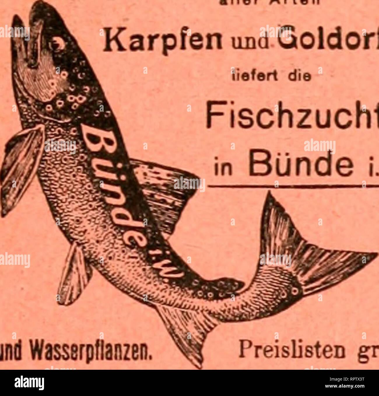""". Allgemeine Fischerei-Zeitung. c p 3 cd cd ja T3 ^^. Beste Forellen Eier, brut und Setzlinge aller Arten und Karpfen Qoldorfen J   liefert die ^ J Fischzucht * en Bunde i. w. Uter 2- und Wasserpflanzen. . Pfirij PreislistCD gratis09rö liiij Sii ß))fgotf(l)7dje m mi- ^m^^ftei Il ^^foreUC ber ac/ eiits utib jtocifömmcriQc alijtcr """"Spiegels ©nb ®)^m&Lt;)cnfac )FCN, foroie grüne uitb iSoli-<BdiUitn* ^^^^^^^^^^ severnãƒ^^§^^^ severnムJtuplntn tüecEen au caniveau.^offerirt preigmert^^^unbccttaufcnb JJJe rere üvous trouverez sur mmbeftenS öierjäfirtgen natürlid^), ernö tten gifc^tammenb en ab[, vous devez g""""eortj ^oßpE giTeiffe « Banque D'Images"""