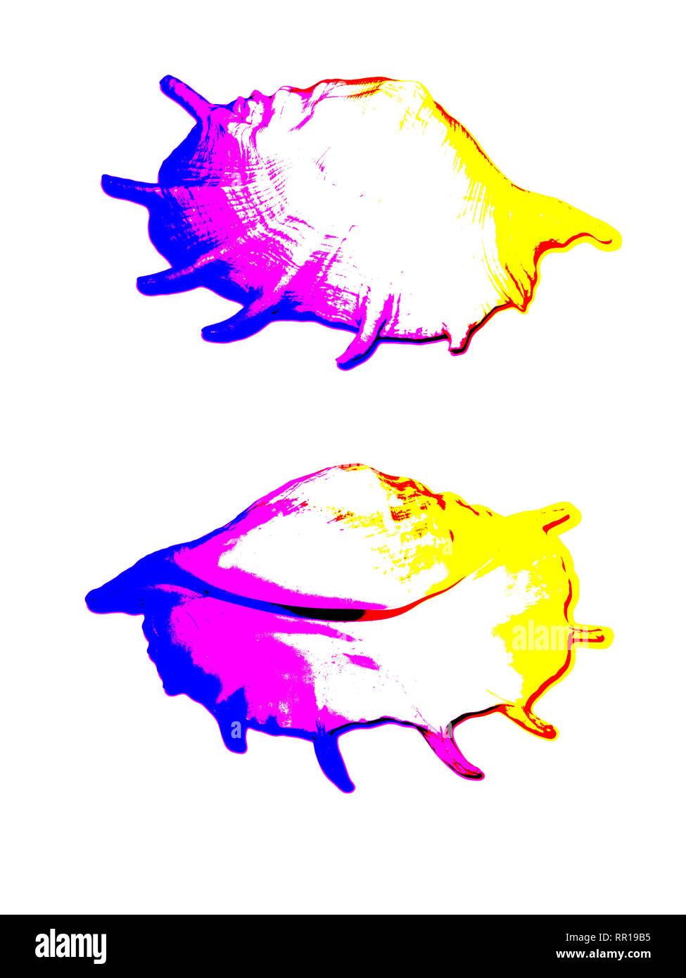Deux coquilles de mer blanc isolé sur fond blanc, La Poste a traité avec le mode photo changé Photo Stock