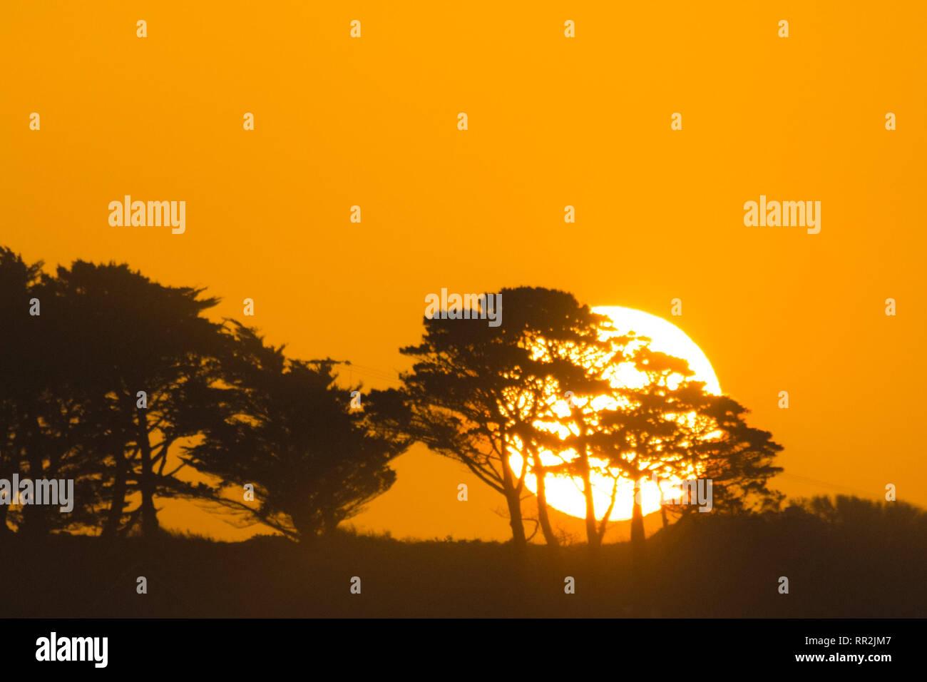 Le soleil se levant derrière un groupe d'arbres avec un ciel jaune Photo Stock