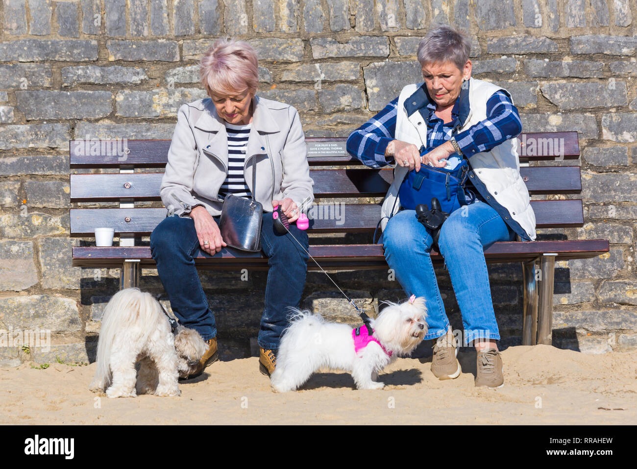 Bournemouth, Dorset, UK. Feb 25, 2019. Météo France: une autre belle chaude journée ensoleillée à Bournemouth comme visiteurs profiter du soleil à la plage sur la journée la plus chaude de l'année et les plus chaudes jamais jour de février. Deux femmes assises sur un banc de travail avec les chiens. Credit: Carolyn Jenkins/Alamy Live News Banque D'Images