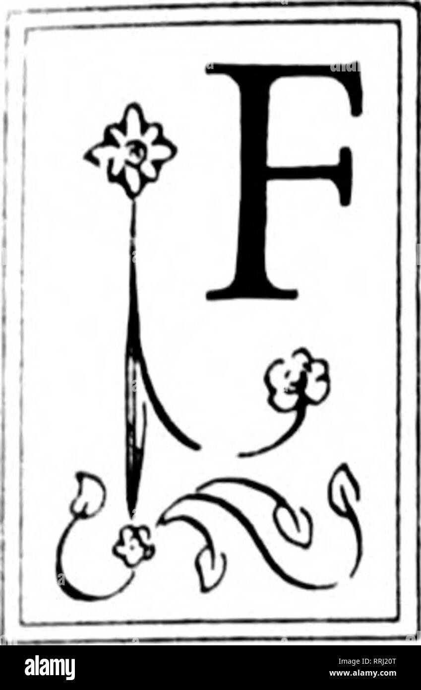 . Les fleuristes [microforme] examen. La floriculture. ALL SAINTS' est j'^ ^ SUD'S BIG DAY ./// Saiiils ihiy' et près de Xc:, h-lciins est de t'en m. soittlicr}} tjorist Mciiional:Jiat jour est dans irte )U)rtli. J'.j'ci-ynnr tan-ii t]i&gt;:,rr à l'crinctcrii. ri';//(-/// luisiness iiooi signifie lor le rolaiJers. Les mamans!h!:'e ti:e eali anil J'J'c j/ri&gt;:fr dans iiantities^ j/ih:e le tlorists^hy ne ir t'.ie L'Creseeiit. itv. l.OIxlSTS ibout en aiiil ;Cd.. Nouveau oi-lrans. Tlu' |ii(tiiir di' tlic Xi'W Orli'iitis maintenant ari';est I'usy- tluMf nciftluM n' lu-n'dtlu'i'S en triidf niios tlu';paire ot le personnel Banque D'Images