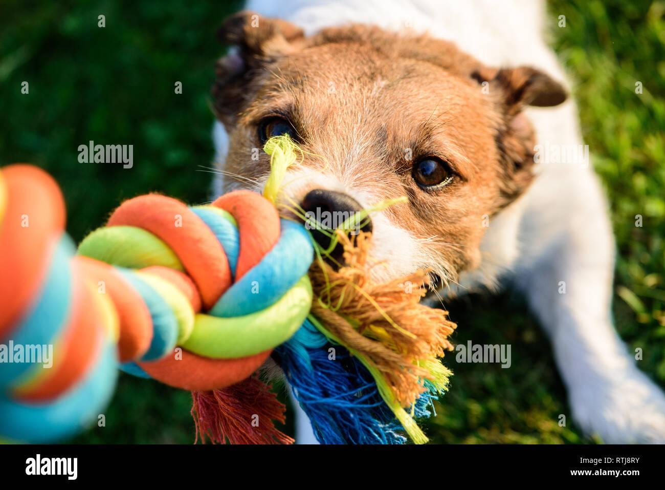 La mastication tire chien jouet corde de coton coloré Photo Stock